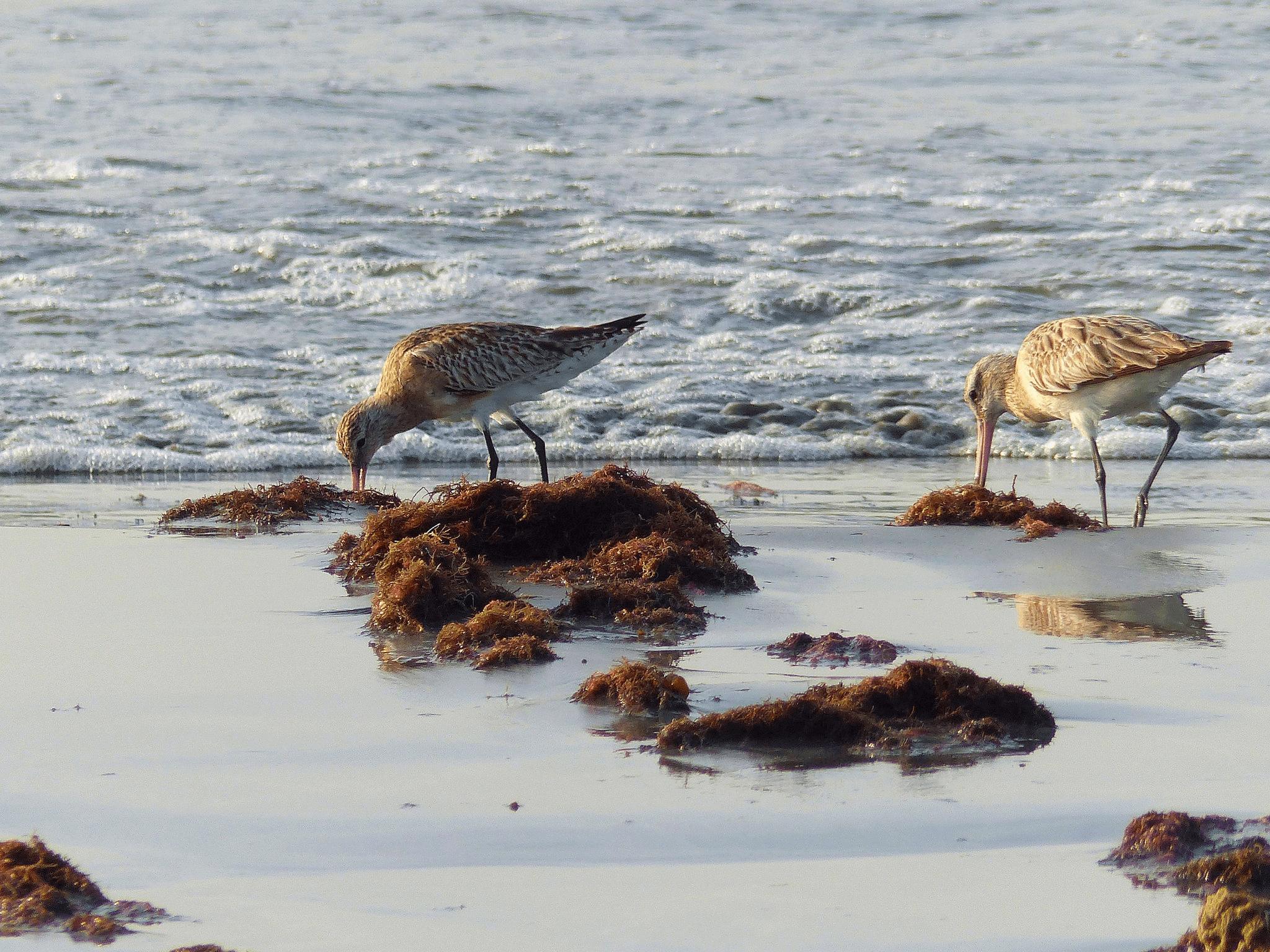 Речной птичий резерват